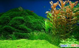 水的硬度高低对水草的影响(图)