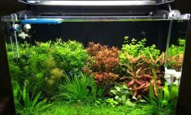 90草缸开缸水草缸过程记录贴水草缸持续更新中沉木杜鹃根