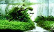 2009年西班牙水生活水族造景大賽
