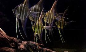 水草造景最近自己做了本水族电子杂志水草缸纯免费的鱼友自己做的爱好者杂志《鱼罐头》图片