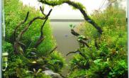 水草缸造景沉木水草泥化妆砂青龙石60CM尺寸设计54