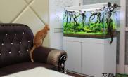 水族箱造景究竟是什么样的草缸水草缸能让猫咪目瞪口呆?