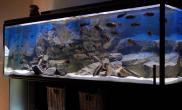 沉木青龙石原生态鱼缸17