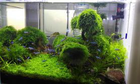 草缸2月纪念水草缸更新鱼缸水族箱