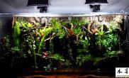 我的水陆缸(一米二的)叫雨林更贴切些沉木杜鹃根青龙石水草泥增加图片