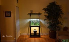 这种风格的水草缸你喜欢吗?