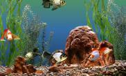 养鱼化风水如何管理好家中养的鱼(图)