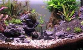 潜水良久水草缸欢迎拍砖水草缸90*50*50