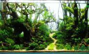 水草造景作品:水草造景(90cm)-23