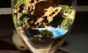 水草造景美美哒永生苔藓微景观