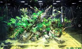 水族箱造景水陆缸中的360度岛屿