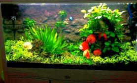 龙缸做生态与七彩鱼的完美结合鱼缸水族箱鱼缸水族箱