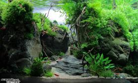 沉木青龙石水草造景45CM及以下尺寸设计37