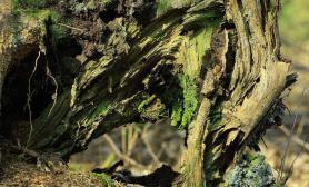 海量树林景森林景实景图片造景素材