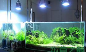 [其它]好一口缸水草缸一口好缸——90CM极品造景