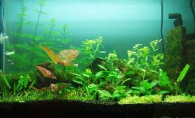 拿不出手的造景水草缸