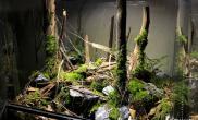 雨林生态缸45CM《微雨林》jomico