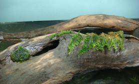 水草缸造景沉木水草泥化妆砂青龙石150CM及以上尺寸设计14