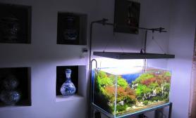 石景90CM草缸夜郎春图片欣赏