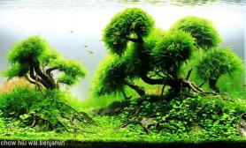 沉木青龙石水草造景90CM尺寸设计25