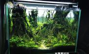 森林水草造景小缸适用于60厘米