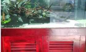 水草造景90*50*50  新开缸记录  记录性多图  求轻拍  图有点乱有点  鱼缸水草造景
