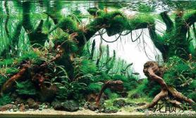 ISTA国际水草造景大赛作品