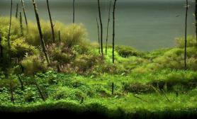 回归大自然水草缸带你体验森林的感觉沉木杜鹃根青龙石水草泥