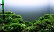 水草造景作品:水草造景(90cm)-25