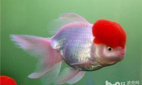 三种检测观赏鱼水质的方法