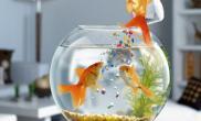 金鱼跳出鱼缸怎么办为什么金鱼跳出鱼缸