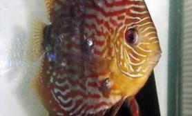 鱼融水养鱼心得之五(图)