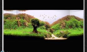 水草缸造景沉木水草泥化妆砂青龙石90CM尺寸设计30