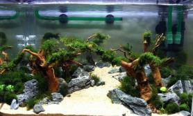 水草造景【水草造景篇】:林间溪水,古树山涧沉木杜鹃根青龙石水草泥