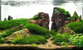 看个一线天的水草造景