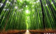 自然美景:十个最美的树隧道