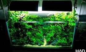 水草缸造景沉木水草泥化妆砂青龙石90CM尺寸设计67