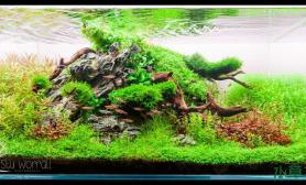 水族箱造景水草缸造景---鱼儿的乐园