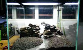 新手草缸骨架水草缸求指导沉木杜鹃根青龙石水草泥