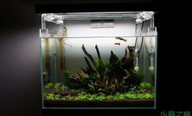 小缸也可以种得很清新水草缸有木有?