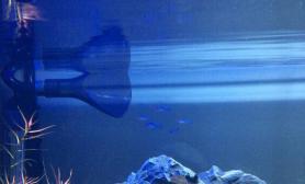 请教水草缸鱼追出水口的问题