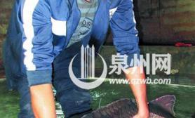 """渔民捕到条""""怪鱼""""5岁中华鲟背上蓝标签成""""免死金牌""""(图)"""