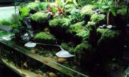水草造景水路生态缸