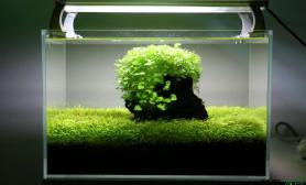 水草造景简单的缸水草缸清爽的缸沉木杜鹃根青龙石水草泥