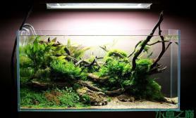 如此绿意盎然的草缸水草缸我只想说水草缸送给我吧鱼缸水族箱
