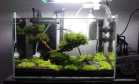 水草造景发发我的小草缸