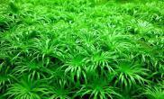 看看咱的绿地毯也别有一番风味吧