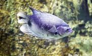 如何选择健康的海水观赏鱼
