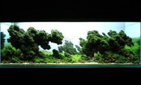 珊瑚MOSS火山石90CM缸水草造景