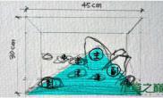 水族箱造景经典造景的分析图